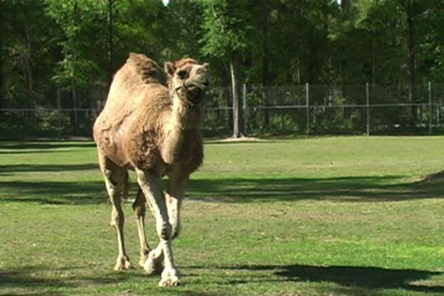 Becky visits Alpaca Ambassadors Inc Ranch