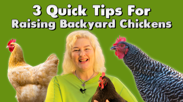 3 Quick Tips For Raising Backyard Chickens