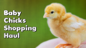 Baby Chicks Shopping Haul
