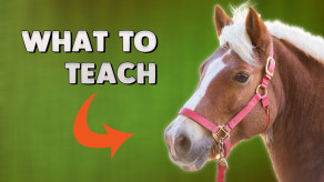 Horse Training: The FIRST 3 things EVERY horse needs to learn.