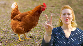 2 Weird Things All Chickens Do