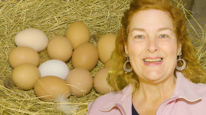 Here's a tour of my full size chicken coop and all the eggs I get.