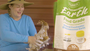 The Best Chicken Mite Treatment You Won't Believe Is All Natural
