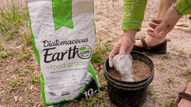 Diatomaceous Earth: where to buy it for the best price.